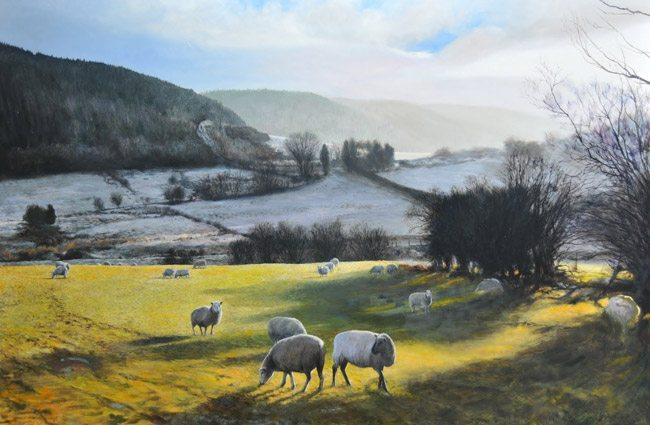 HarryRobertson-Sheep-near-Wrexham