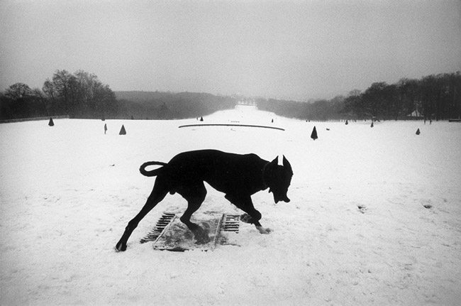 josef-koudelka-photography-mastering-composition-dog-aspective-view