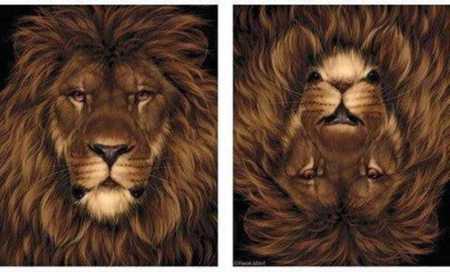 Law-of-Pragnanz-gestalt-psychology-illusion-lion-mouse-2