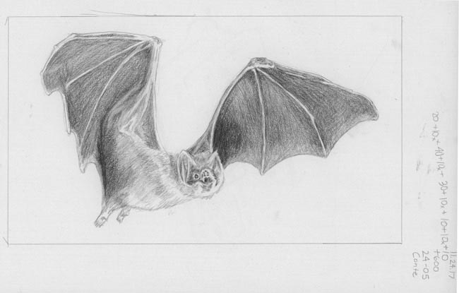 canon-of-design-drawing-game-with-dynamic-symmetry-composition-and-gestalt-psychology-drawing-samples-bat-flying